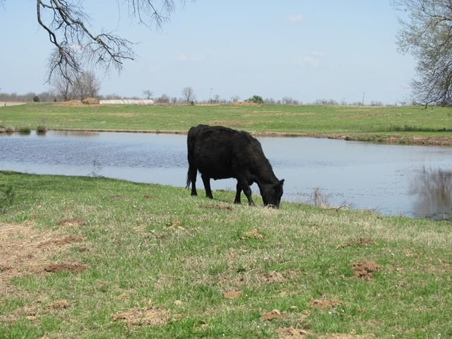 130 Acres- Powell Ranch- Muskogee County, OK