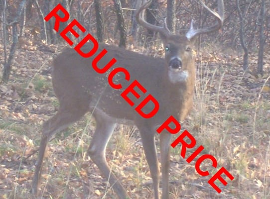 80 Acres- Trophy Ridge Hunting Ranch