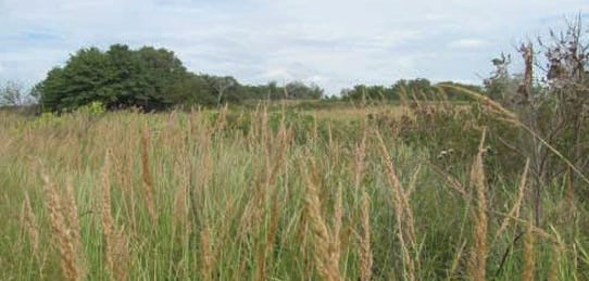 160 acre Fimple Cattle Ranch for Sale- Pawnee County, Oklahoma (SOLD)