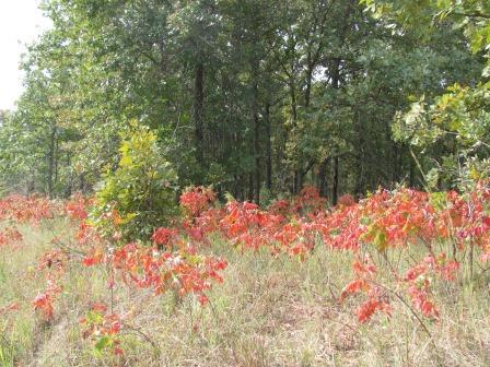 Montgomery 225 acres   Osage County