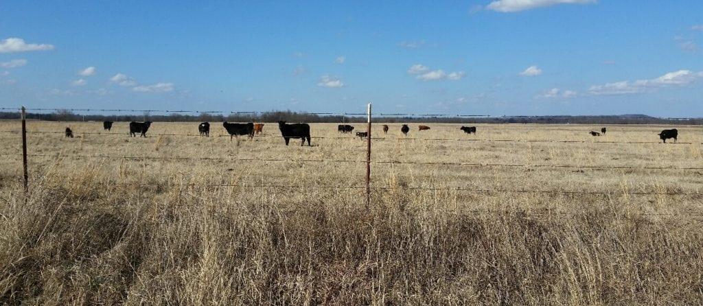 Cross Creek Ranch- 2822 Acres+/- Muskogee County, OK